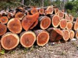 African Padouk clean cut square logs