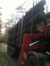 Hardwood  Logs Oak European ISPM 15 - Firewood, Oak (European), PEFC/FFC