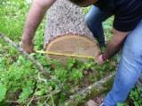 Hardwood  Logs - Oak logs (European), First billet, A grade