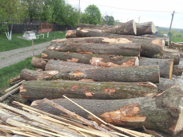 Saw-Logs--Oak-%28European%29