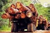 Bosques Ningún Certificado Hasta Ahora - VENDO R. DOMINICANA, ACACIA CANTIDADES MILLONARIAS