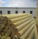 Softwood  Logs - Fir/Spruce 8-20 cm AB Cylindrical Trimmed Round Wood from Romania