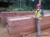 Sawn Lumber: Padouk