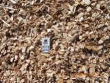 Wholesale All species Wood Chips From Used Wood in Romania