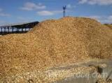 Wholesale Biomass Pellets, Firewood, Smoking Chips And Wood Off Cuts - Wood Chips - Bark - Off Cuts - Sawdust - Shavings, Wood Saw Dust, Maritime Pine (Pinus pinaster)
