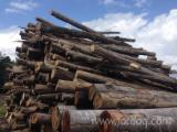 Hardwood  Logs - Firewood, Hornbeam