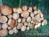 Wood Logs For Sale - Find On Fordaq Best Timber Logs - Saw Logs, Lärche/Tanne/Douglasien