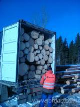 供应 爱沙尼亚 - 锯材级原木, 云杉-白色木材