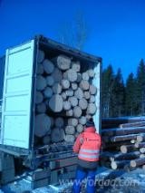 Softwood  Logs For Sale - Spruce SAW LOGS