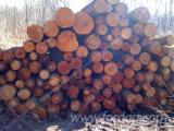 Energie- Und Feuerholz Brennholz Ungespalten - Brennholz Ungespalten 50 and up mm