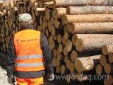 null - Kiefer - Föhre 200 mm normal saw logs quality Schnittholzstämme Estland zu Verkaufen
