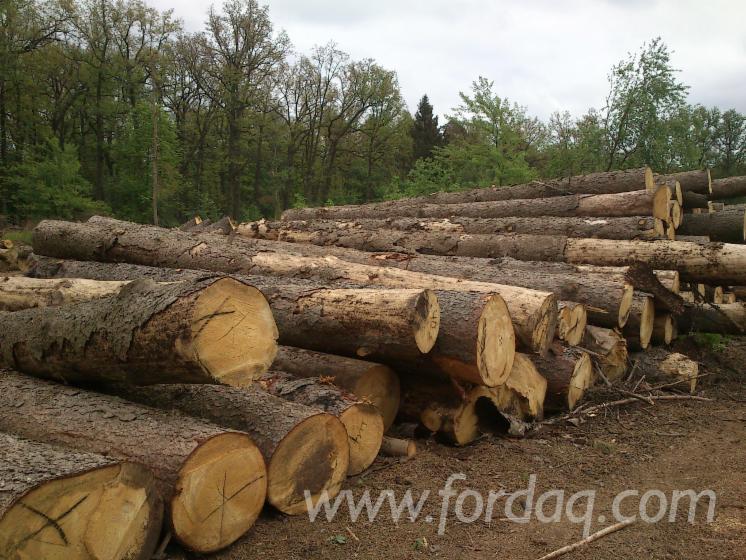 Pine-fir-radiant