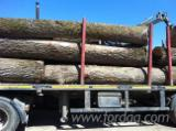Hardwood Logs importers and buyers - Oak Romanian Origin Logs Gurun Sawmill Quality