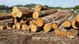 Furnierholz, Messerfurnierstämme, Hickory