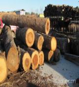 Furnierholz, Messerfurnierstämme, Tulpenholz (American Yellow Poplar)