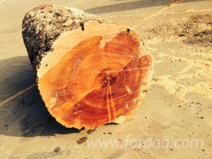 Quebracho-Logs-%28recoverd-from-ship-in-North-Sea-after-50-years-under