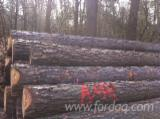 Softwood  Logs For Sale - GERMAN PINUS SYLVESTRIS LOGS, ABC GRADE