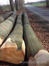 GERMAN BEECH LOGS, ABC GRADE