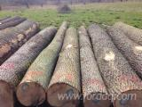 GERMAN ASH LOGS, ABC GRADE