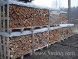 拉托维亚 - Fordaq 在线 市場 - 劈好的薪柴-未劈的薪柴 薪碳材/开裂原木 榉木