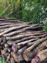 Hardwood  Logs - Firewood, Mischung - Eiche/Buche/Kirsche