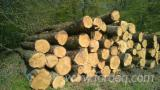 Hardwood  Logs PEFC FFC - WHITE OAK LOGS PEFC/FFC