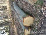 Hardwood  Logs - German white oak logs 40cm and up