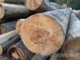 Vend Grumes De Déroulage Hêtre, Chêne