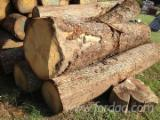 Hardwood  Logs Oak European - Looking for White oak logs