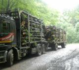 Camion Transport Busteni - Camion transport bustean - Mercedes actros 2543
