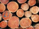 Softwood  Logs Demands - Saw Logs, Douglas / Larix