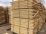 Fencing poles, stakes, machine rounded 60*1800 and 60x1500