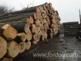 Hardwood Logs For Sale - Register And Contact Companies - Saw Logs, Poplar