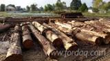 Forest And Logs North America - Cypress Veneer Logs
