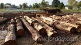 Cypress Veneer Logs