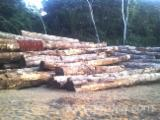 Tropical Wood  Logs USA - PAO ROSA LOGS