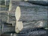 Hardwood  Logs Demands - ACACIA (ROBINIA)LOGS BUY