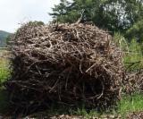 Ogrevno Drvo - Drvni Ostatci All Species - All Species Korišćeno Drvo Rumunija