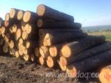Hardwood  Logs For Sale Romania - Saw Logs, Beech/Oak