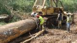 Tropsko Drvo  Trupci - Za Rezanje, Teak, Kamrun