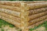 Square Milled Log House, Chinese weeping cypress (Cupressus funebris)