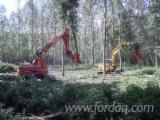 Mechanized felling, France