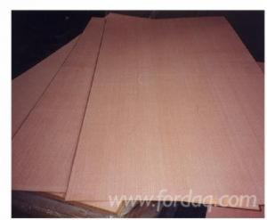 Beech--Natural-Plywood
