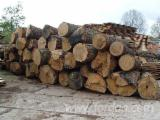 Hardwood Logs importers and buyers - 34-64 cm Oak (European) Saw Logs in Poland