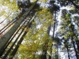 Forests For Sale In Romania 500 HA