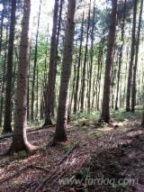 Woodlands Romania Beech Europe For Sale - Offer For Sale in Romania - 1300 HA