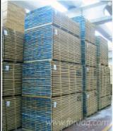 Hardwood Timber - Sawn Timber   Italy - Fordaq Online market - Oak Planks 20 mm