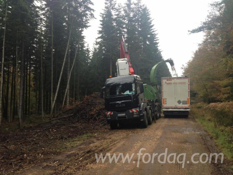 Wood chips from forest