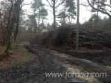 Forest Services France - Felling - Skidding