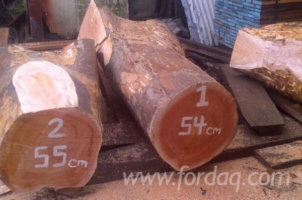 Mahogany-%28Swietenia-macrophylla%29-Crotch-Round-Logs-for